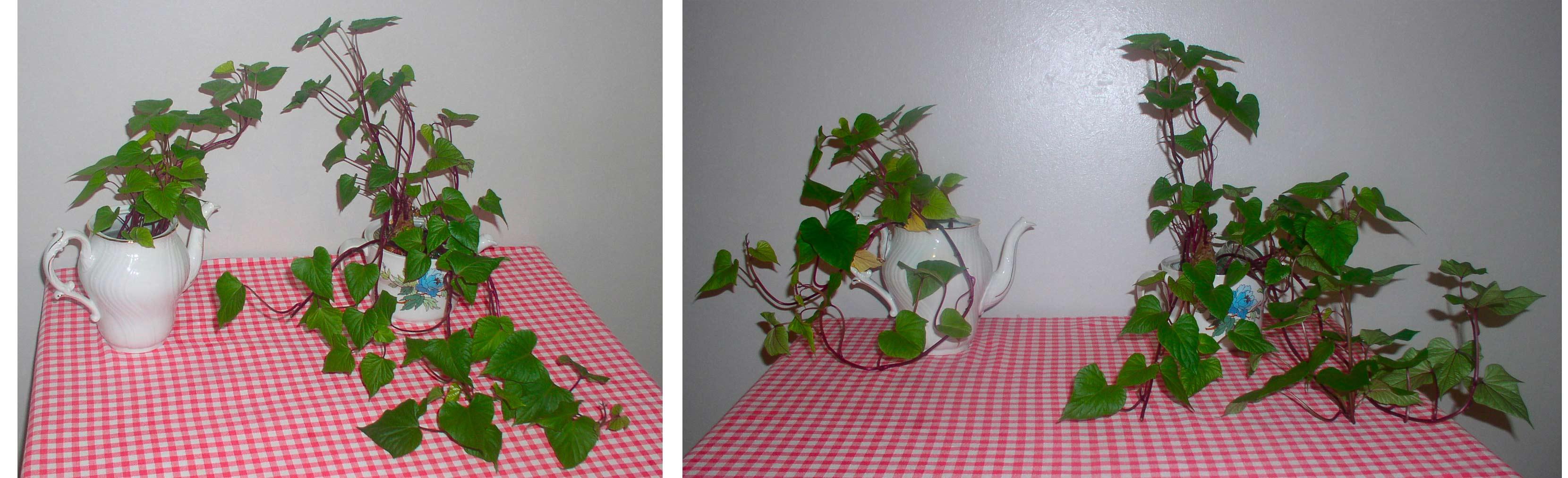 gli effetti del Cleanergy sulle piante